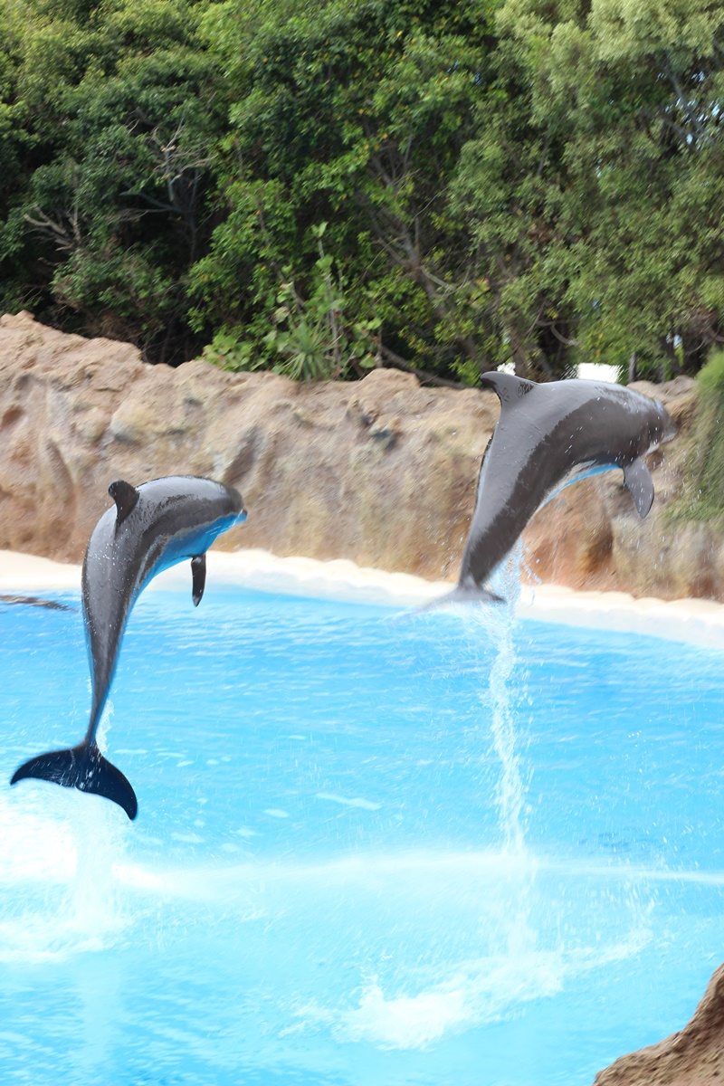 Loro Park Dolphin Show in Tenerife - Canary Islands, Spain