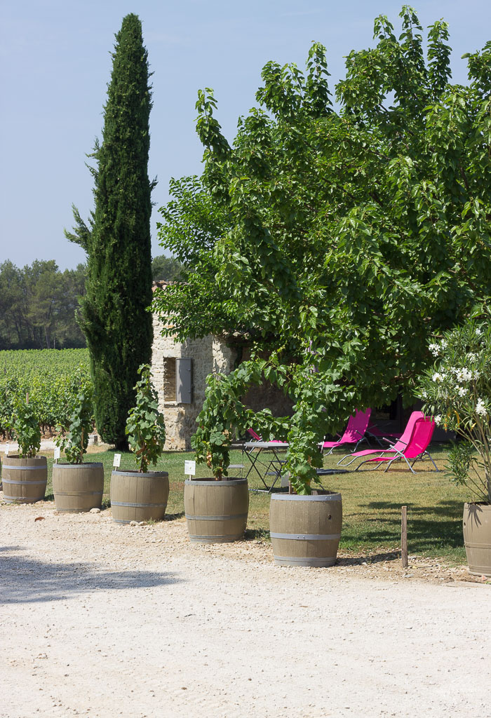Visiting Wine Vineyards in Southern France made me fall in love (all over again) with the art of wine making...