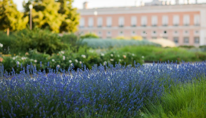 How to get that Summertime feeling in Aranjuez