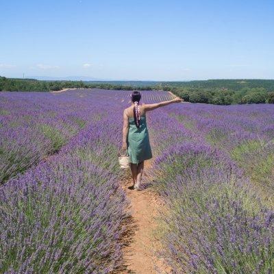 Brihuega Guadalajara | Lavender Fields in Spain