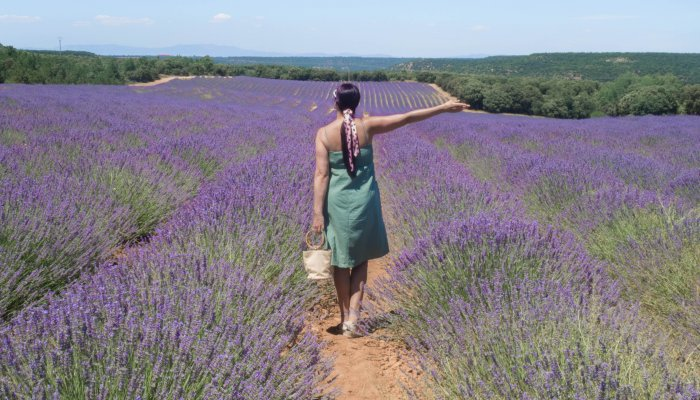 Brihuega Guadalajara | Lavender Fields in Spain